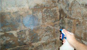 Подготовленные стены смачивают водой