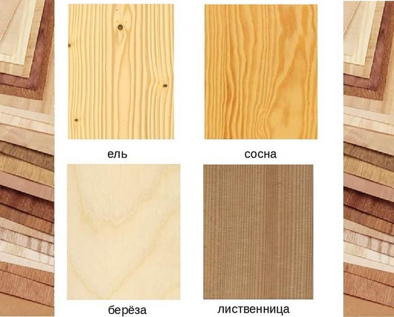 Породы древесины, используемые для изготовления фанеры