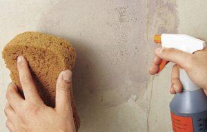 Поверхность стен смачивают влажной губкой или обрызгивают пульверизатором