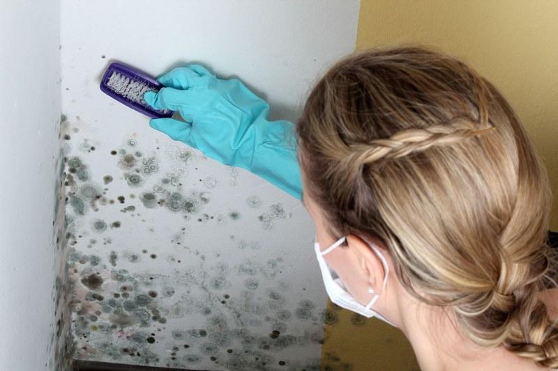 Стены перед нанесением штукатурки следует очистить от плесени и грибка