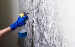 Высолы и плесень удаляют специальными химикатами